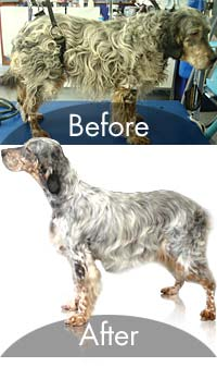 dog grooming before and after